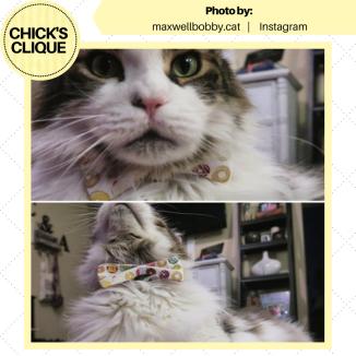 maxwellbobby.cat