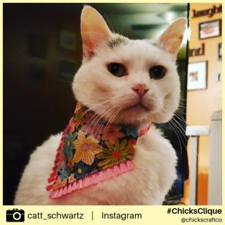 catt_schwartz