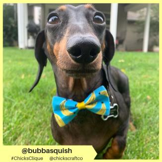 bubbasquish