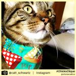 catt_schwartz (10)
