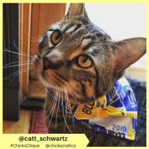 catt_schwartz (14)