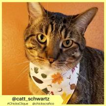 catt_schwartz (15)