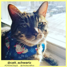 catt_schwartz (16)