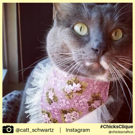 catt_schwartz (8)