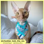 cheddar_bob_the_rex (10)