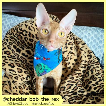 cheddar_bob_the_rex (12)