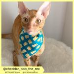 cheddar_bob_the_rex (2)