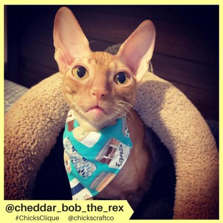 cheddar_bob_the_rex (3)