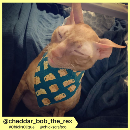 cheddar_bob_the_rex (4)