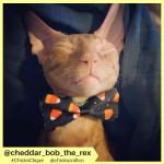 cheddar_bob_the_rex (5)
