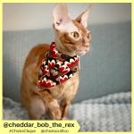 cheddar_bob_the_rex (6)