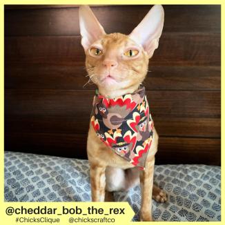 cheddar_bob_the_rex (7)