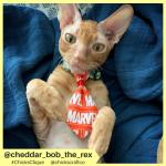 cheddar_bob_the_rex (8)