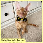 cheddar_bob_the_rex (9)