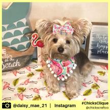 daisy_mae_21 (21)