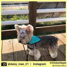daisy_mae_21 (25)