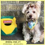 daisy_mae_21 (26)