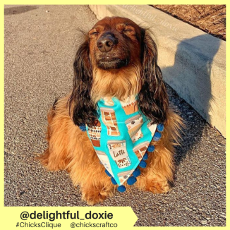 delightful_doxie (11)