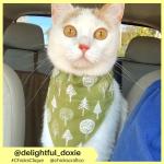 delightful_doxie (4)