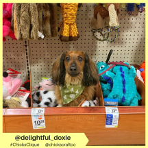 delightful_doxie (6)