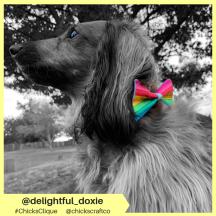 delightful_doxie (7)