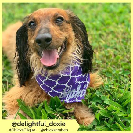 delightful_doxie (8)
