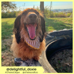 delightful_doxie (9)