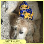 Emily S Etsy