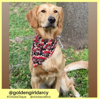 goldengirldarcy (2)