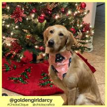 goldengirldarcy (3)