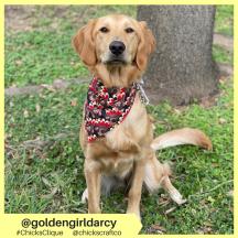 goldengirldarcy