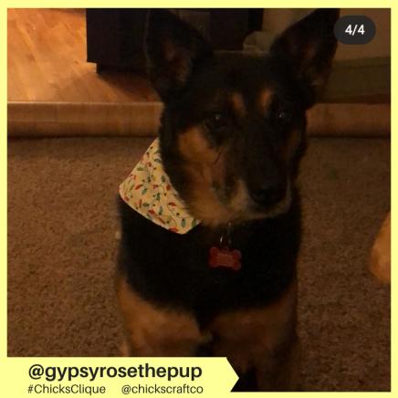 gypsyrosethepup (7)