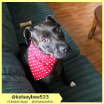 kelseybee523 (6)