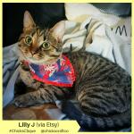 Lilly J (2)