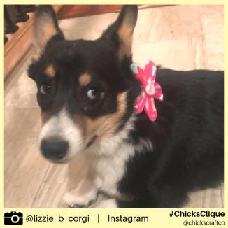 lizzie_b_corgi