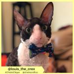 louis_the_crex (20)