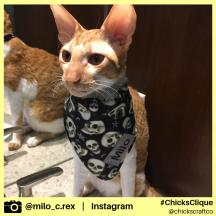 milo_c.rex (13)
