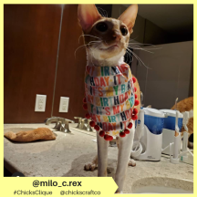 milo_c.rex (17)