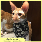 milo_c.rex (18)