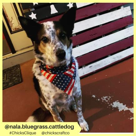 nala.bluegrass.cattledog (4)
