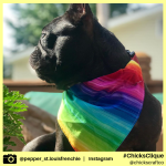 pepper_st.louisfrenchie (10)
