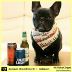 pepper_st.louisfrenchie (11)