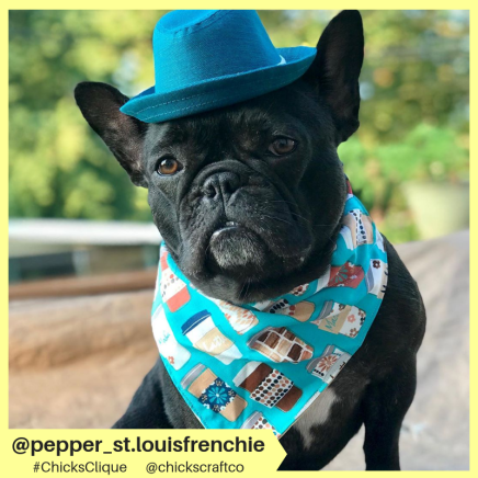 pepper_st.louisfrenchie (15)