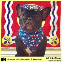pepper_st.louisfrenchie (16)