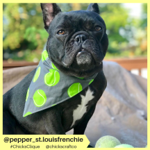 pepper_st.louisfrenchie (17)