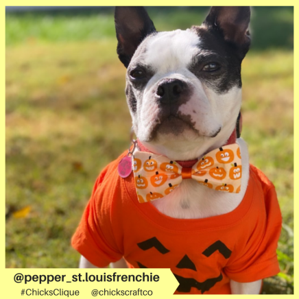pepper_st.louisfrenchie (20)