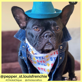 pepper_st.louisfrenchie (21)