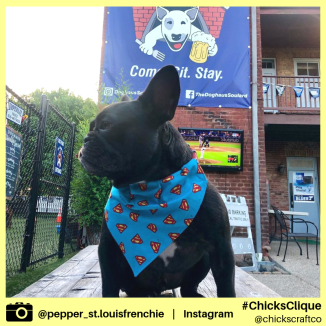pepper_st.louisfrenchie (3)