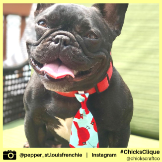 pepper_st.louisfrenchie (5)