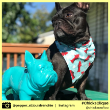 pepper_st.louisfrenchie (6)